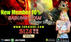 Tokojudi.com Agen Judi Sabung Ayam Online Bonus Setiap Deposit