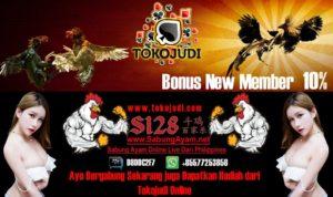 Tokojudi.com Situs Agen Sabung Ayam Online Bonus Member Baru